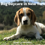 best dog daycare in NYC