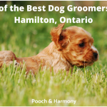 best dog groomers in Hamilton, Ontario