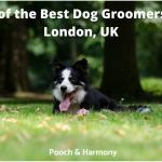 best dog groomers in London, UK