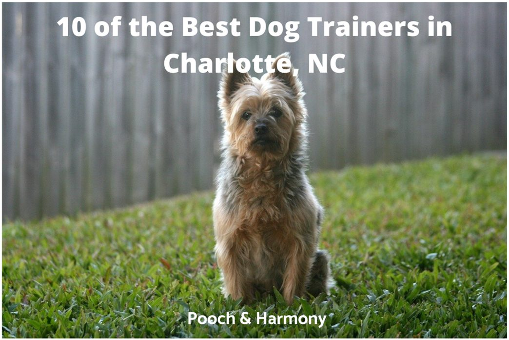 best dog trainers in Charlotte, NC