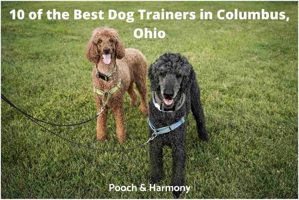 best dog trainers in Columbus, Ohio