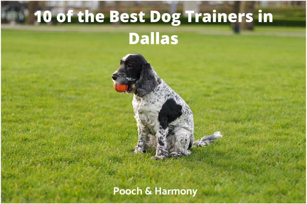 best dog trainers in Dallas