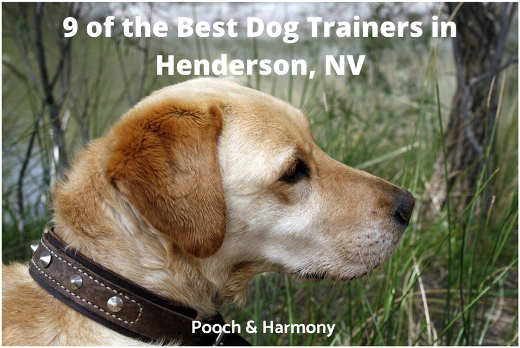 best dog trainers in Henderson, NV