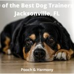 best dog trainers in Jacksonville, FL