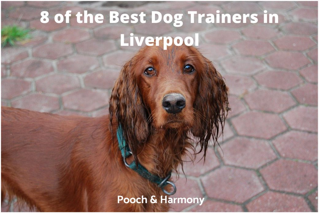 best dog trainers in Liverpool