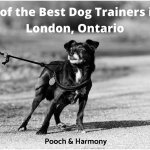 best dog trainers in London, Ontario