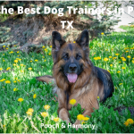 best dog trainers in Plano, TX