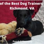 best dog trainers in Richmond, VA