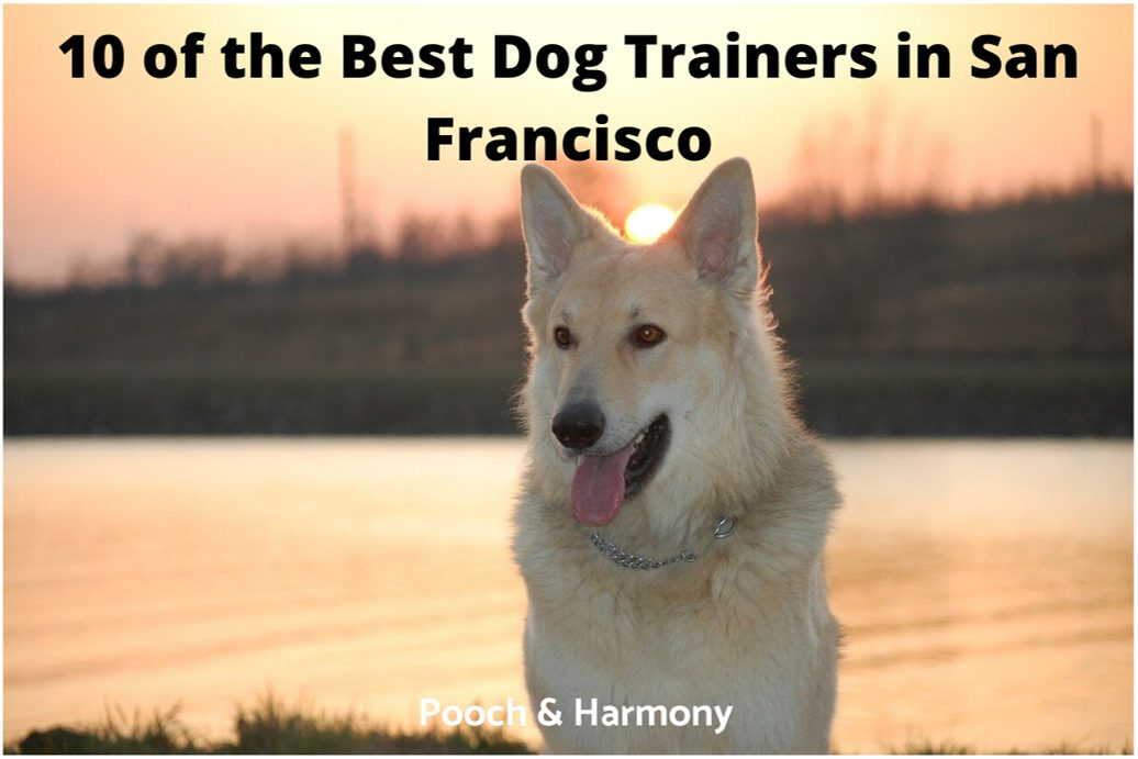 best dog trainers in San Francisco