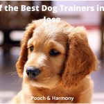 best dog trainers in San Jose