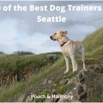 best dog trainers in Seattle