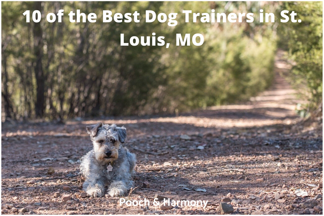 best dog trainers in St. Louis, MO