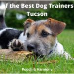 best dog trainers in Tucson