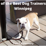 best dog trainers in Winnipeg