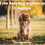 best dog walkers in San Francisco