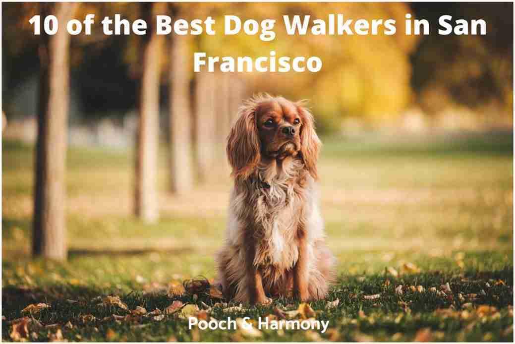 best dog walkers in San Francisco