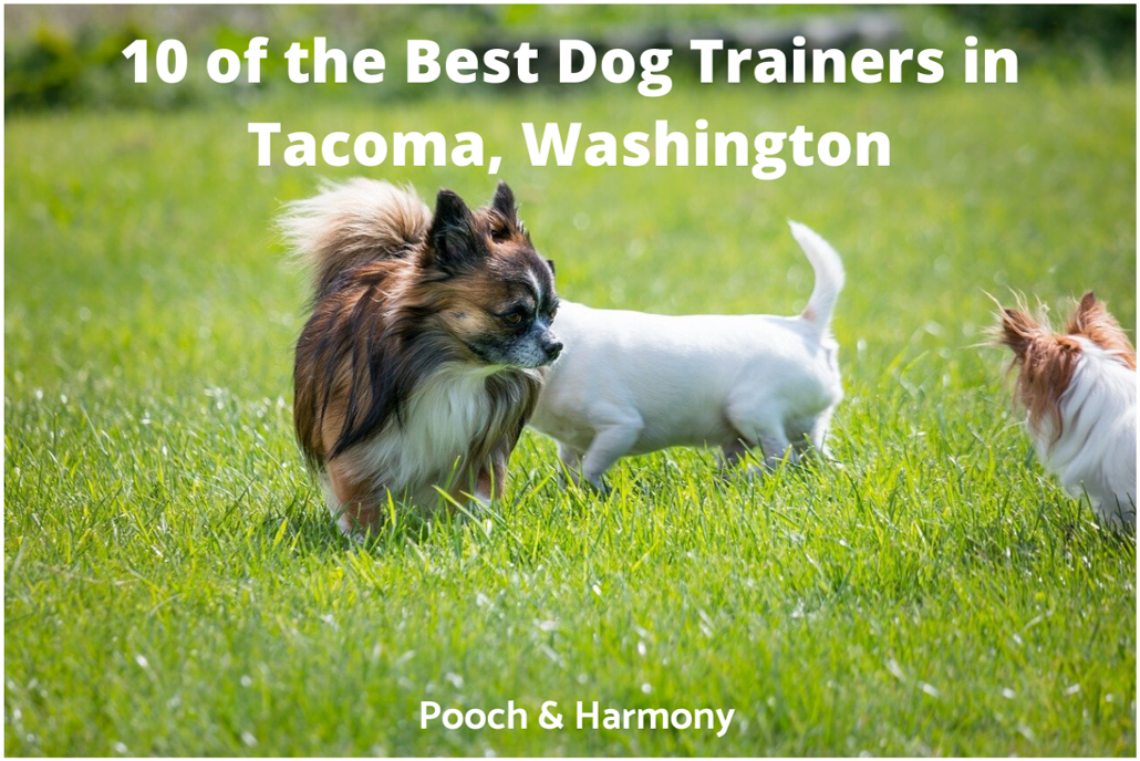 dog trainers in Tacoma, Washington