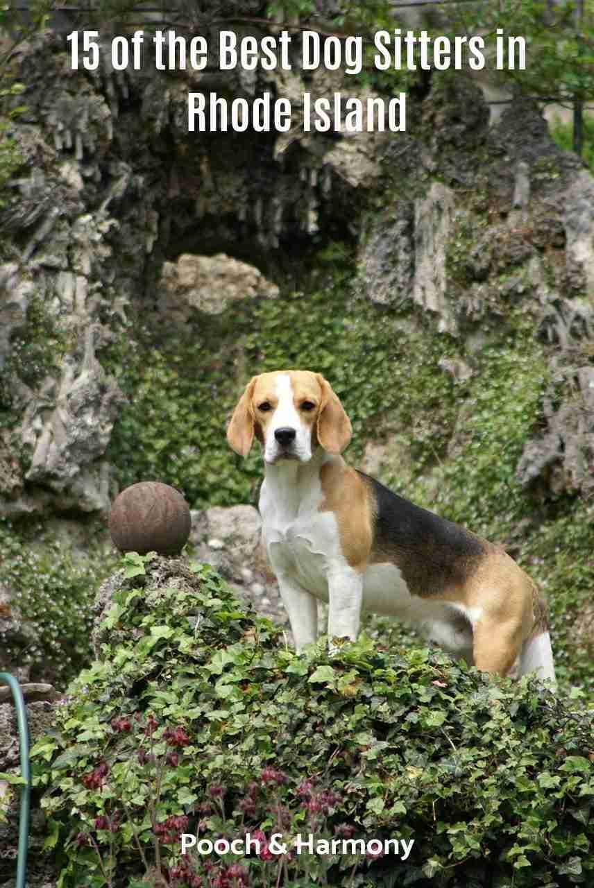 Best Dog Sitters Rhode Island