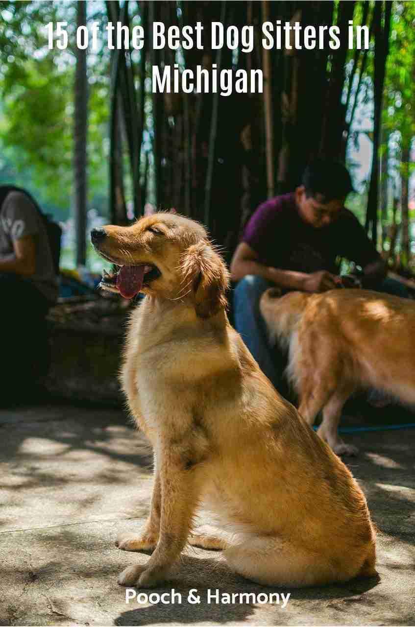 Dog Sitters in Michigan
