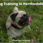 Dog Training in Hertfordshire