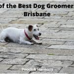 best dog groomers in Brisbane