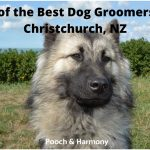 best dog groomers in Christchurch, NZ