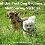 best dog groomers in Melbourne, Victoria