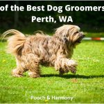 best dog groomers in Perth, WA