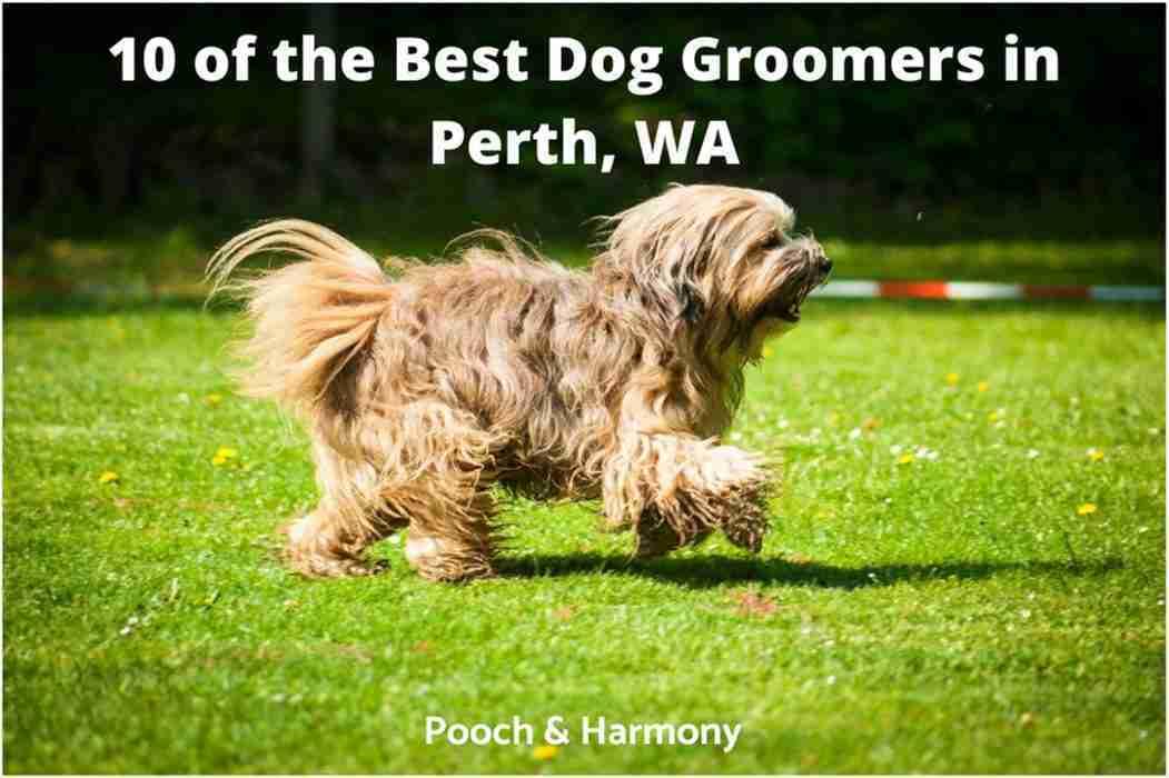 best dog groomers in Perth, WA