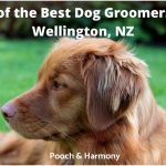 best dog groomers in Wellington, NZ