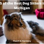 best dog sitters in Michigan