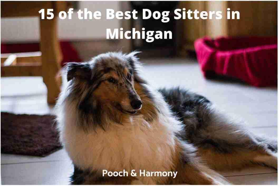 best dog sitters in Michigan