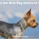 best dog sitters in NYC