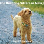 best dog sitters in New Jersey