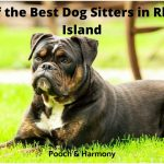 best dog sitters in Rhode Island
