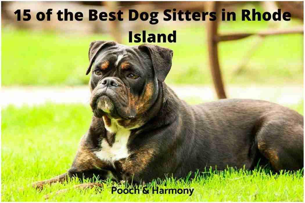 best dog sitters in Rhode Island