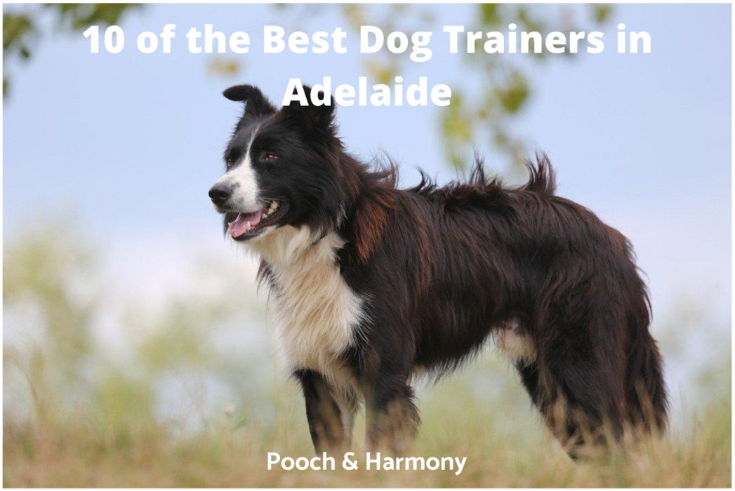 best dog trainers in Adelaide