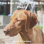 best dog trainers in Bay of Plenty