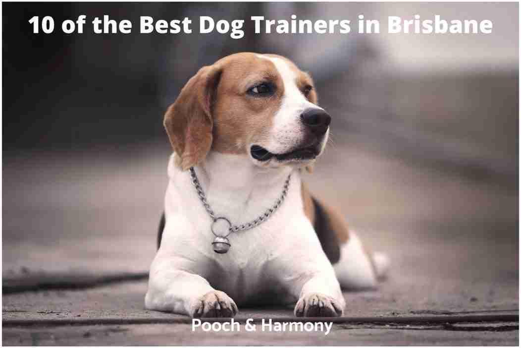 best dog trainers in Brisbane