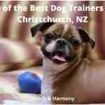best dog trainers in Christchurch, NZ