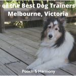 best dog trainers in Melbourne, Victoria