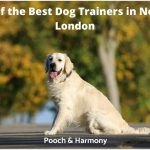 best dog trainers in North London