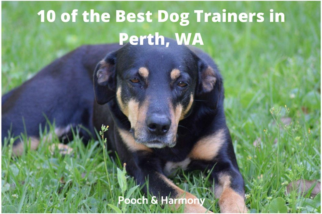 best dog trainers in Perth WA