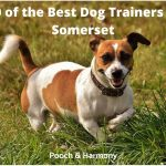 best dog trainers in Somerset