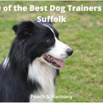 best dog trainers in Suffolk