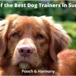 best dog trainers in Surrey