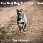best dog trainers in Waikato