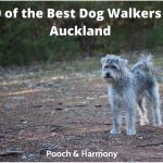 best dog walkers in Auckland