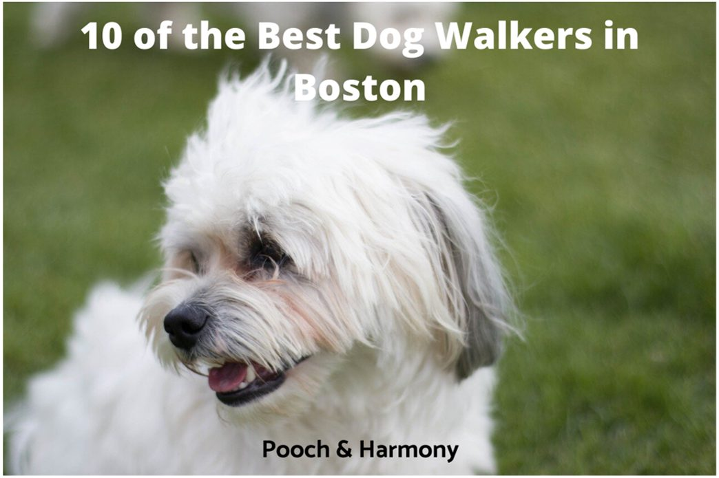 best dog walkers in Boston