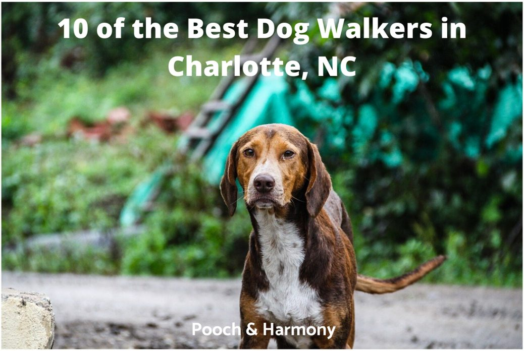 best dog walkers in Charlotte, NC